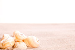 Sea shells on beach sand Stock Images