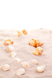 Sea shells on beach sand Royalty Free Stock Photos