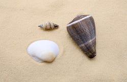 Sea shells. On beach sand as a background Stock Photos
