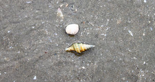 Sea shells in beach sand. Thailand Royalty Free Stock Photography