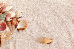 Sea Shells On Beach Sand Royalty Free Stock Images