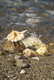 Sea shells on the beach. Stock Photography