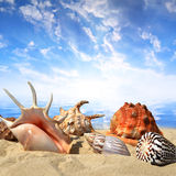 Sea shells on beach Royalty Free Stock Images