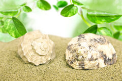 Sea shells on the beach under green leaves Stock Images