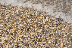 Sea shells on a beach with wave Royalty Free Stock Images