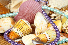 Sea shells and beads Royalty Free Stock Photography
