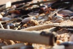 Sea shells Royalty Free Stock Photography