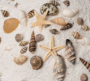Sea shells on a bed of sand. Royalty Free Stock Image