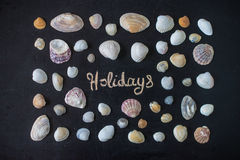 Sea shells on the black board. Royalty Free Stock Photos