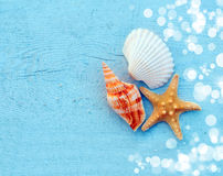 Sea shells. On a blue background stock photo