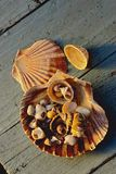 Sea shells on blue boards Royalty Free Stock Image