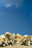 Sea shells with blue sky. Royalty Free Stock Image