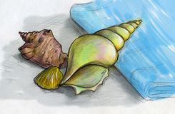 Sea shells on a blue towel. Still life with three different sea shells and blue towel. Pencil drawn sketch, colored Royalty Free Stock Image