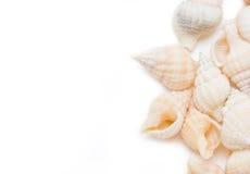 Sea Shells Border. Stock Photo