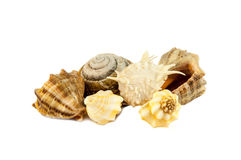 Sea shells from the bottom of the Black Sea Stock Photography