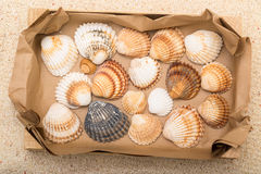 Sea shells in box Royalty Free Stock Photography
