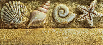 Sea Shells on Brown Background. Closeup Royalty Free Stock Images