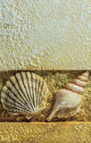 Sea Shells on Brown Background, Closeup. In Vertical Pattern Stock Image