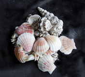 Sea shells in a bunch on black background Stock Image