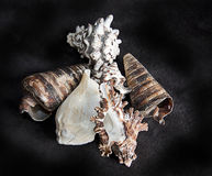 Sea shells in a bunch on black background Stock Photo