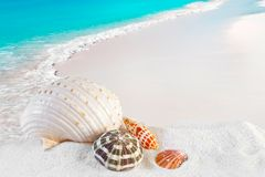 Sea Shells On Caribbean Beach Royalty Free Stock Photos