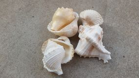 Sea shells. On cemented floar away from sea Royalty Free Stock Photography