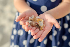 Sea shells. Stock Images