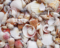Sea shells and clams closeup Royalty Free Stock Photos