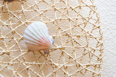 Sea shells and clams on mesh Stock Photos