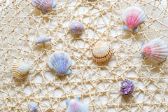 Sea shells and clams on mesh Stock Images