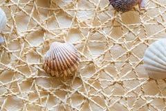 Sea shells and clams on mesh Stock Photo