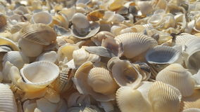 Sea shells close up Stock Photo