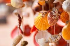 Sea shells close up Royalty Free Stock Photos