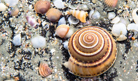 Sea shells in close up view. Sea shells in close up view on the beach royalty free stock photo