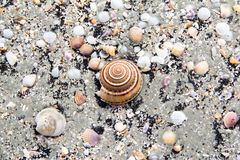Sea shells in close up view on the beach. Royalty Free Stock Photography