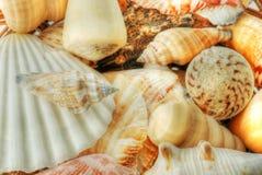 Sea shells in closeup royalty free stock photography