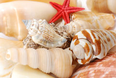 Sea shells in closeup Stock Image
