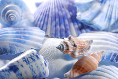 Sea shells in closeup Stock Photos
