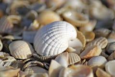 Sea shells. Coast. Beach Stock Photos