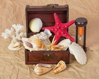 Sea shells, cockleshells, starfishes in a chest Royalty Free Stock Photo