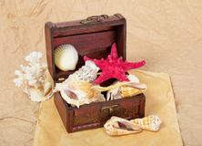 Sea shells, cockleshells, starfishes in a chest Royalty Free Stock Image