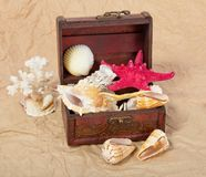Sea shells, cockleshells, starfishes in a chest Stock Photo