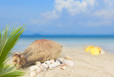 Sea shells and coconut fruit on beach background Stock Image