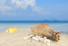 Sea shells and coconut fruit on sand beach background Stock Photos