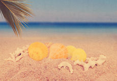 Sea shells and coconut leaf on sand beach background Stock Photo