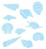 Sea Shells Collection Stock Photos