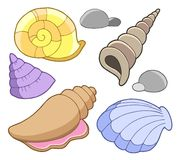 Sea shells collection Royalty Free Stock Photos