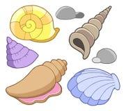 Sea Shells Collection Royalty Free Stock Photos
