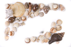 Sea shells collection Royalty Free Stock Photography