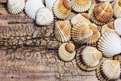 Sea shells collection Royalty Free Stock Photo